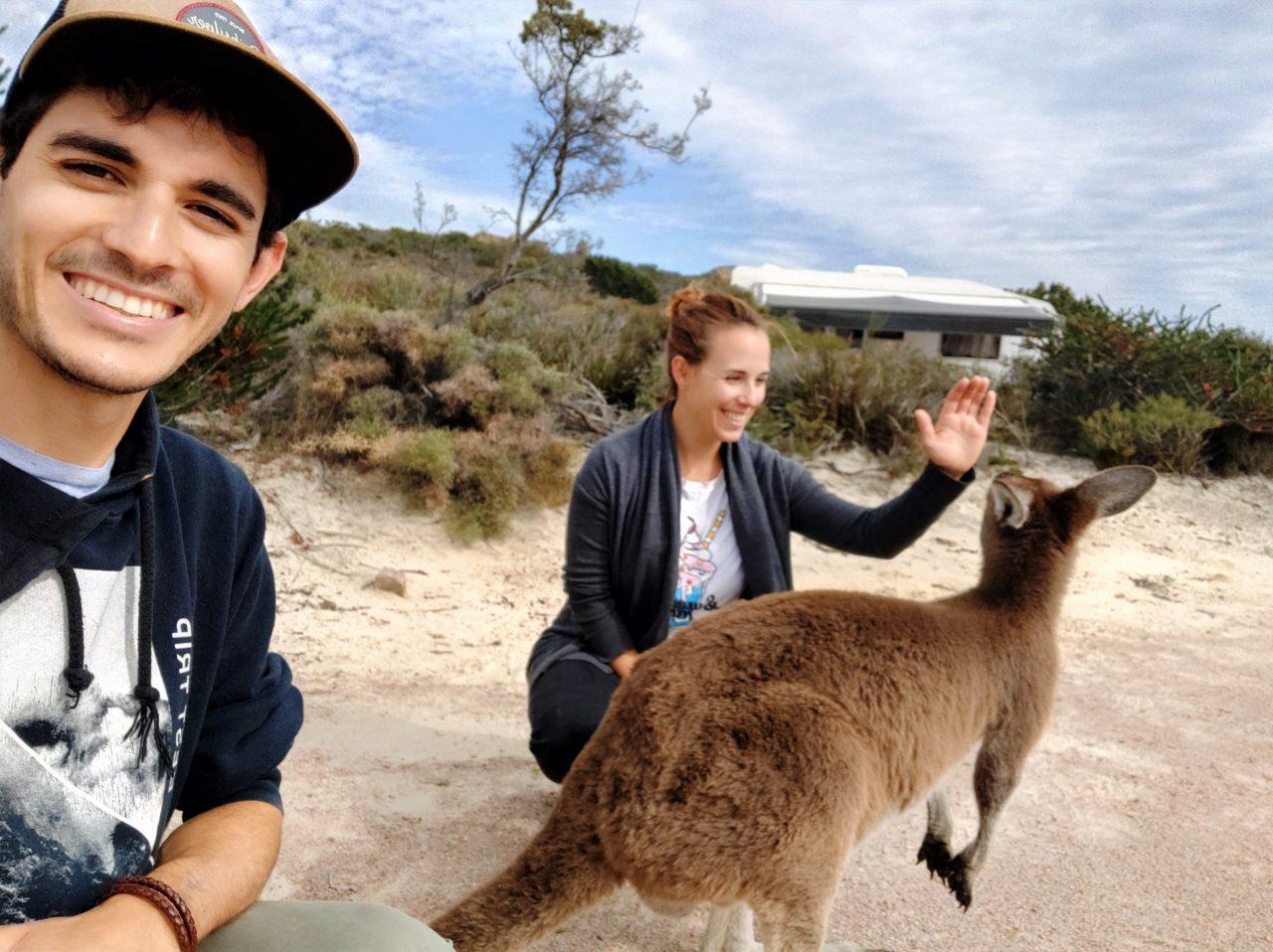 Ver kangaroos en Australia