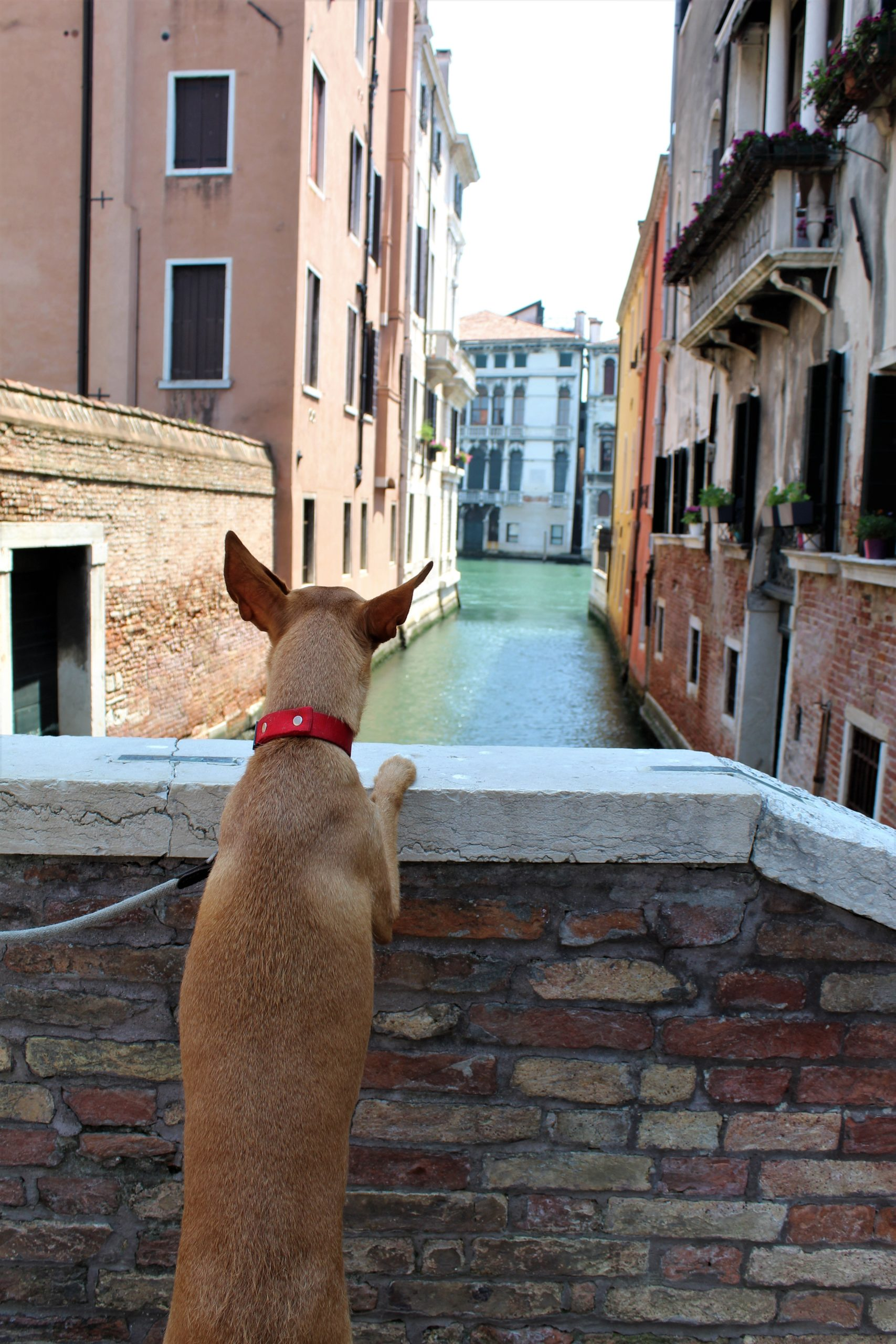 Un dia paseando en Venecia