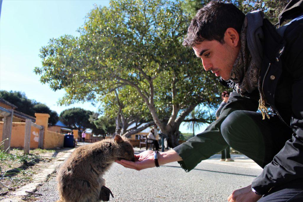 Animales de Australia y donde verlos
