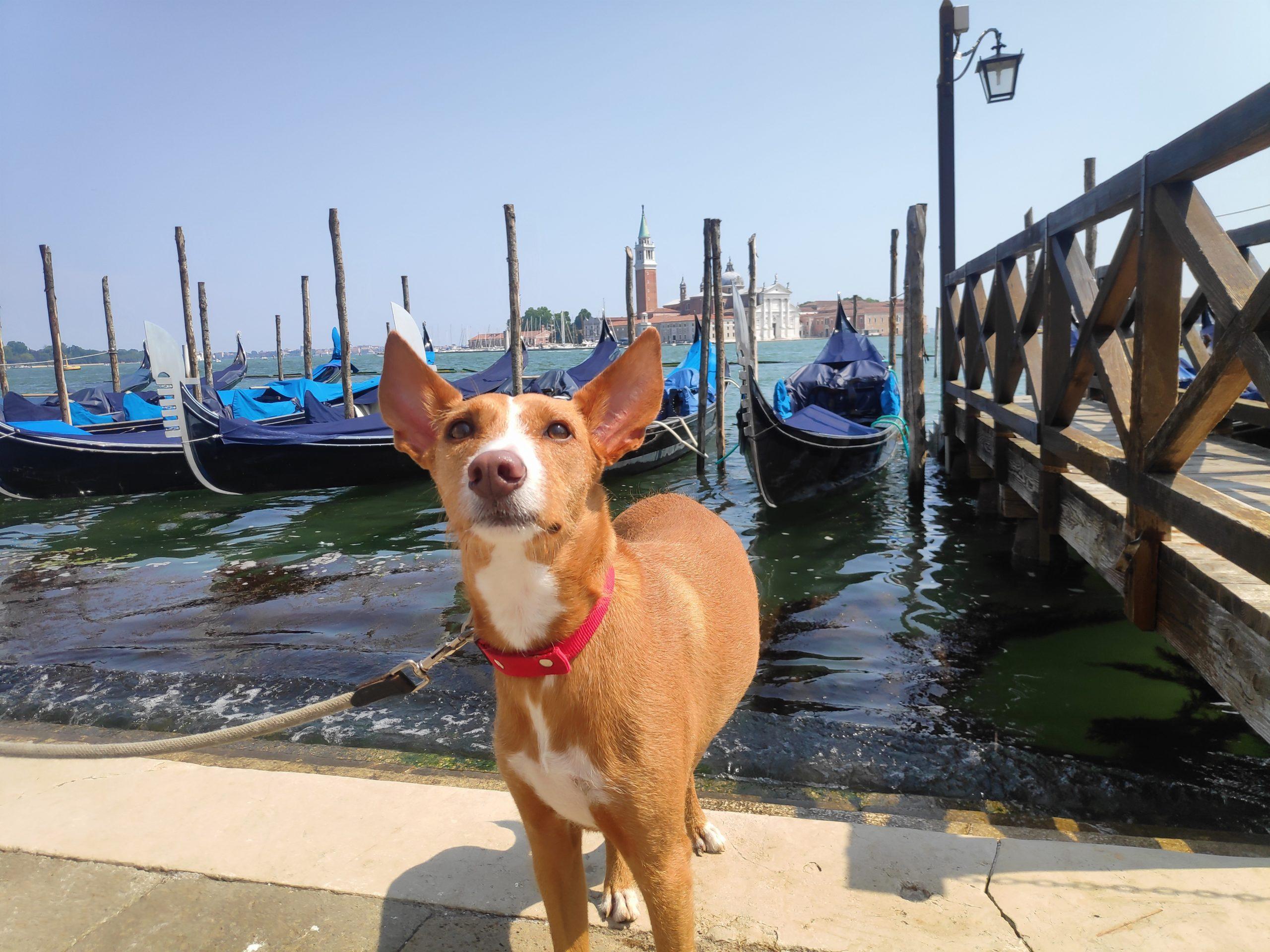 Isla de Guidecca en Venecia
