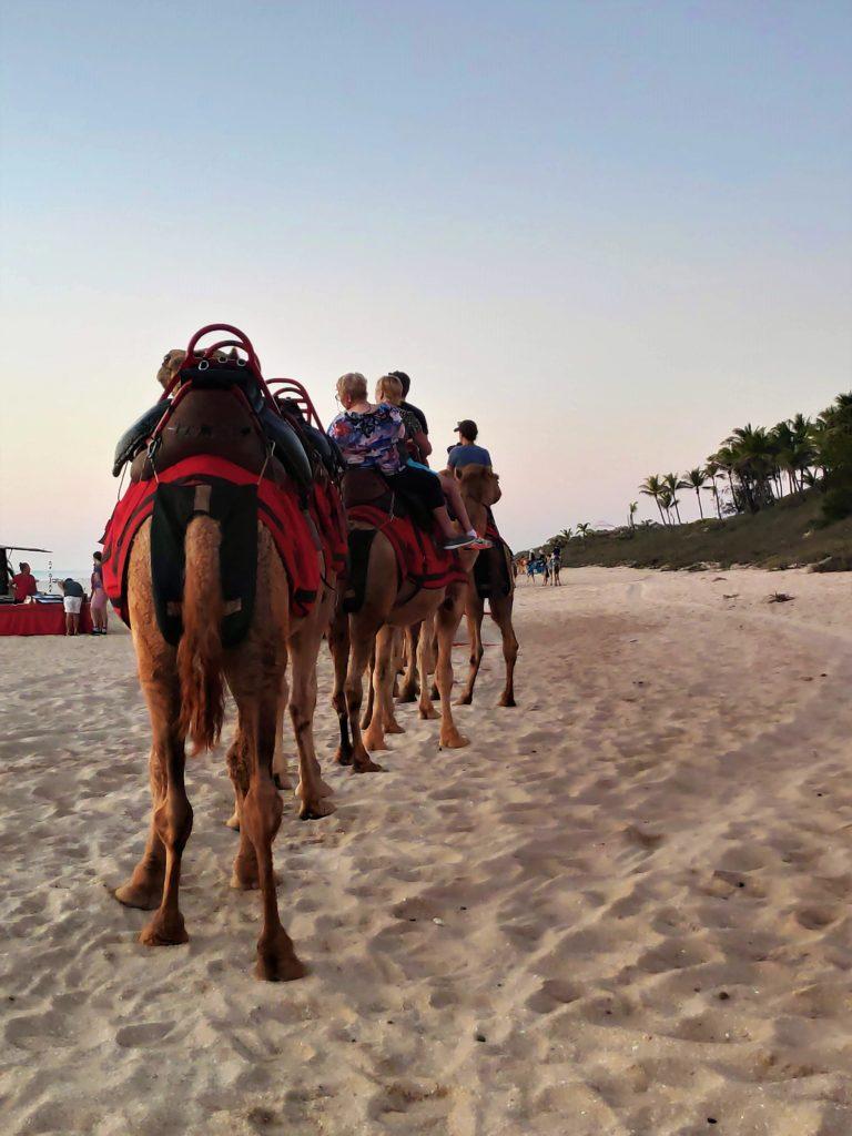 Camellos en el desierto de Australia