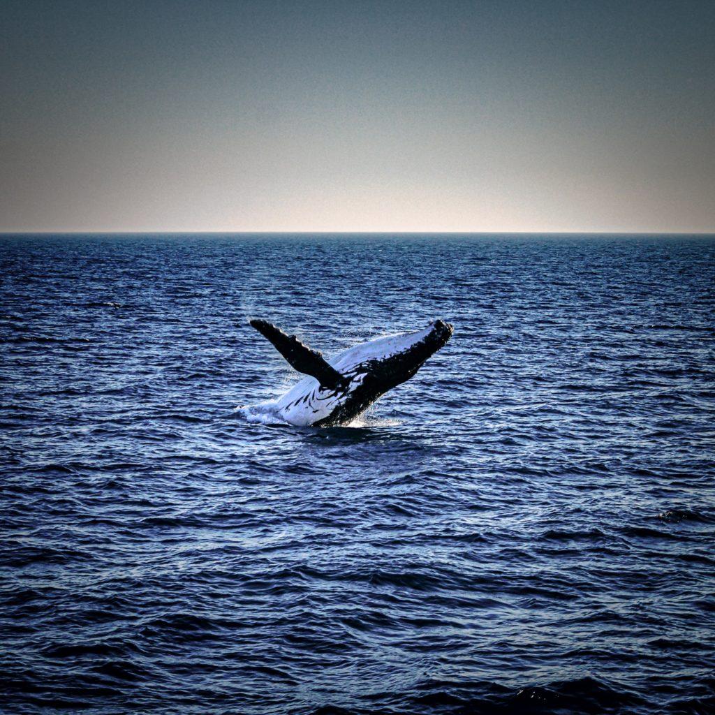 donde ver ballenas en Australia